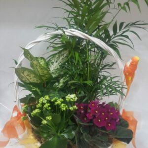 cesta plantas