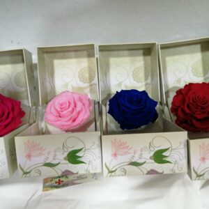 rosa preservada caja regalo