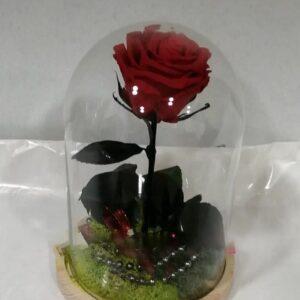 rosa preservada cúpula