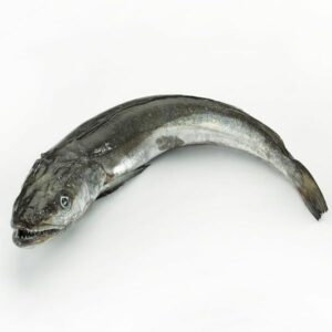 pescadilla